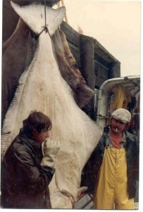 unloading a 325 pound Halibut in 1981